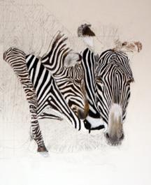 3492-Zebra-Painting1